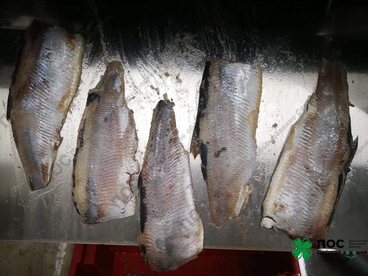 31.01.20 / Запущена автоматическая шкуросъемная машина для рыбы.