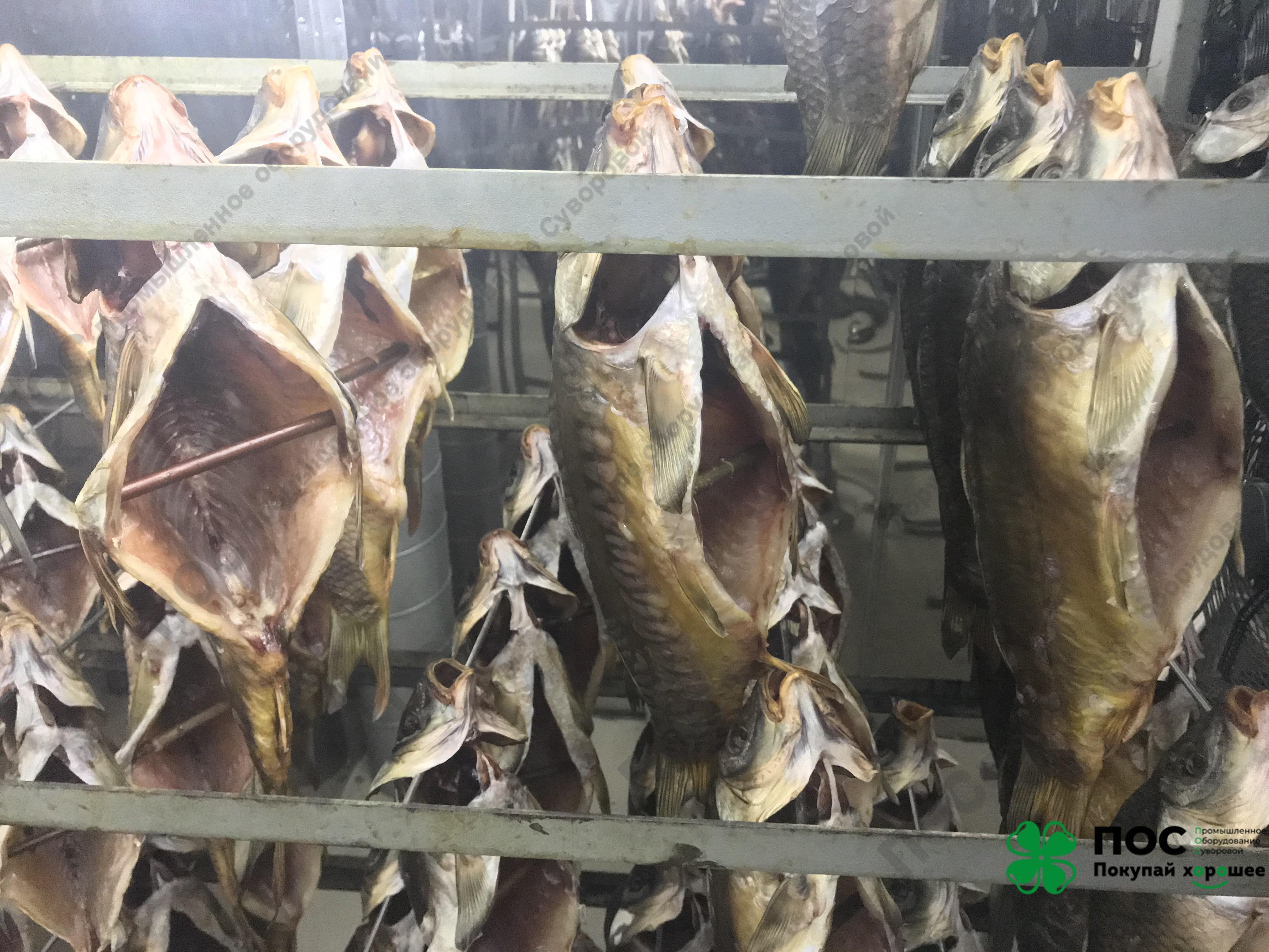4.03.2020 / 12 часов вяления целой рыбы до товарного вида с влажностью 62,5%.